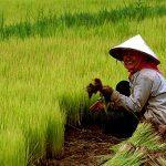 فهرست 114 شرکت فعال چینی در زمینه محصولات کشاورزی ، نوشیدنی و غذایی