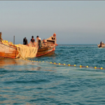 ممنوعیت صادرات ماهی حلوا سفید